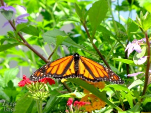 Epcot butterfly enclosure