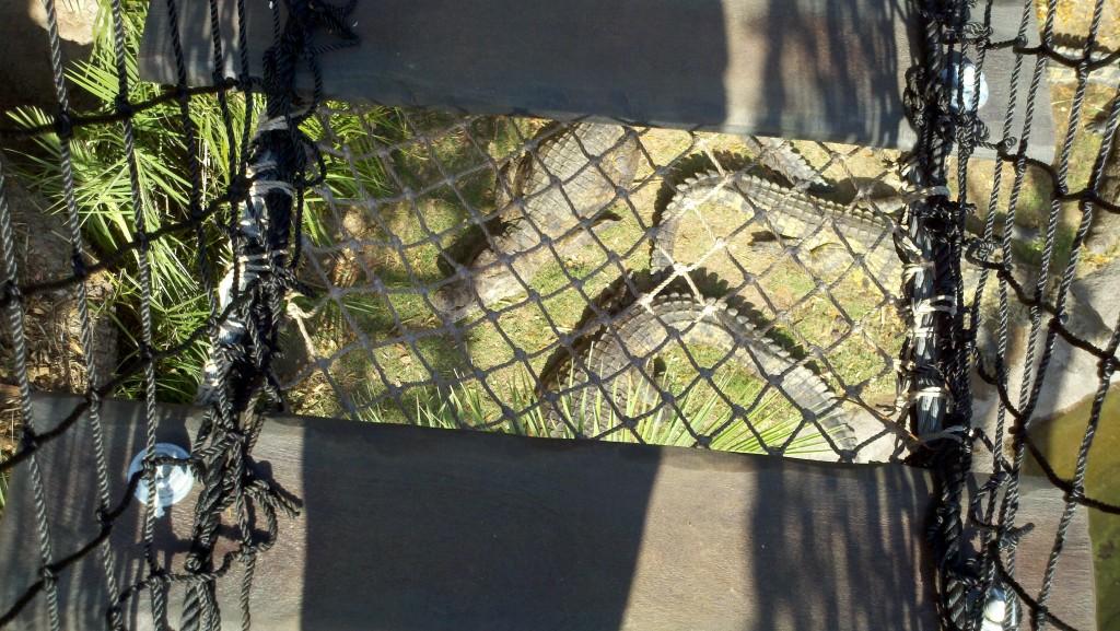 Crocs from bridge