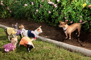Beverly Hills Chihuahua 2 DVD Release, Twitter Party and Activity Sheets!