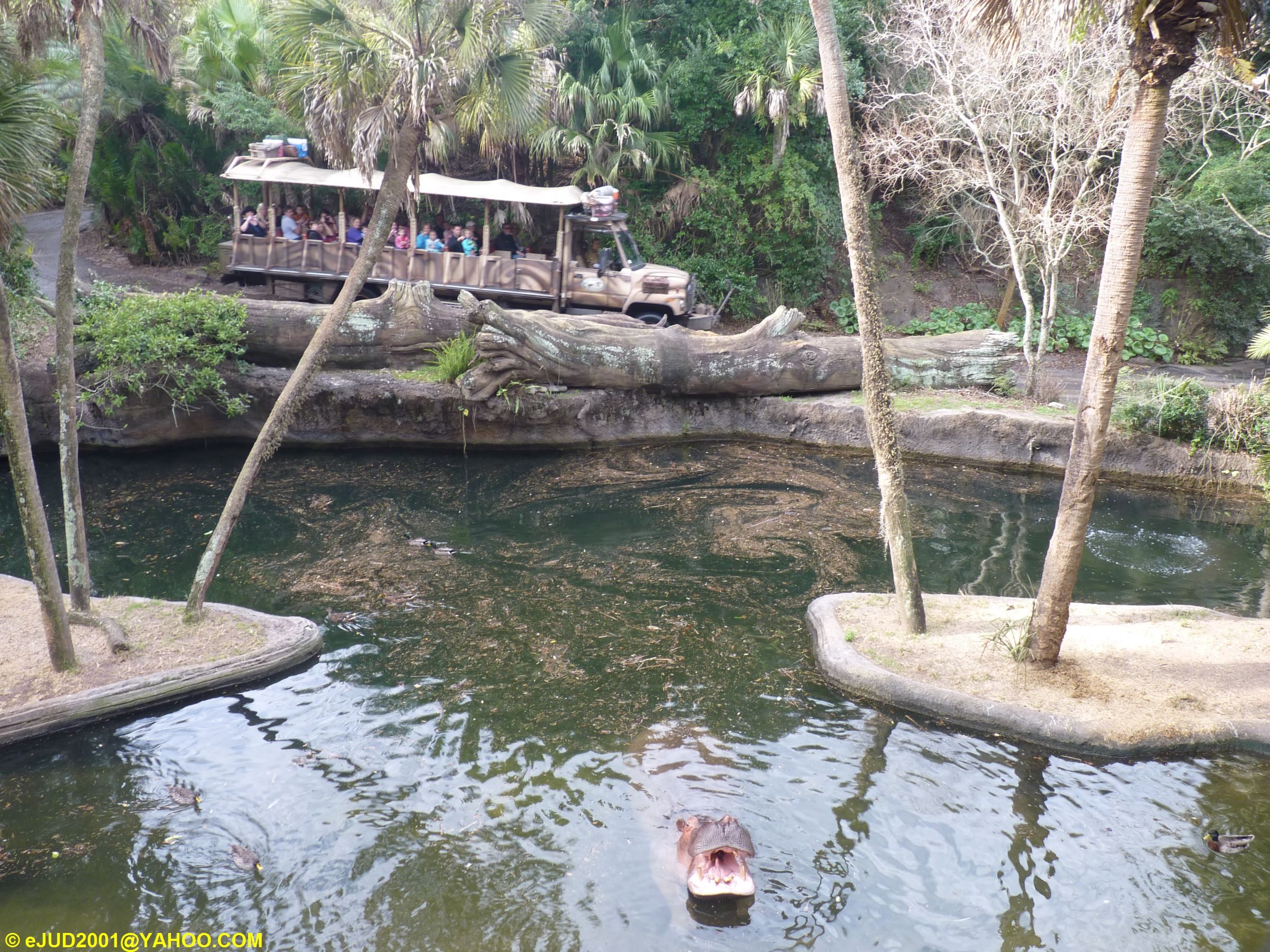 Jud's Disney Picture of the Day: HIPPO POND