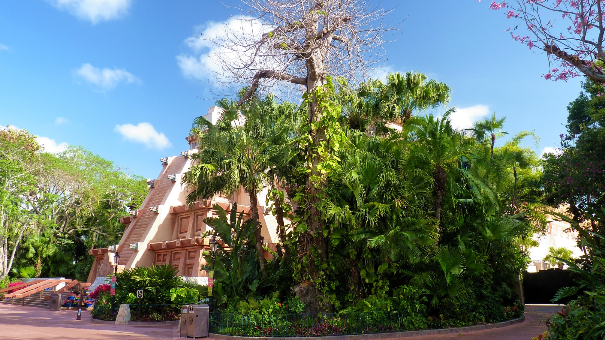 Jud's Disney Picture of the Day: TREE IN MEXICO