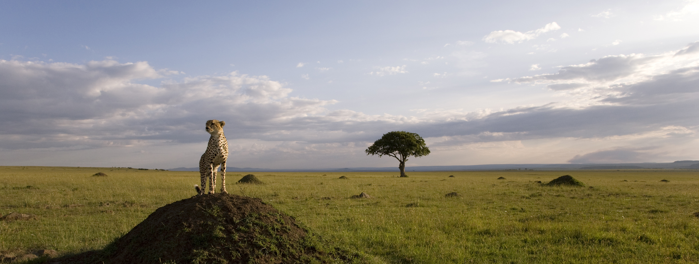 See African Cats-Save The Savanna!