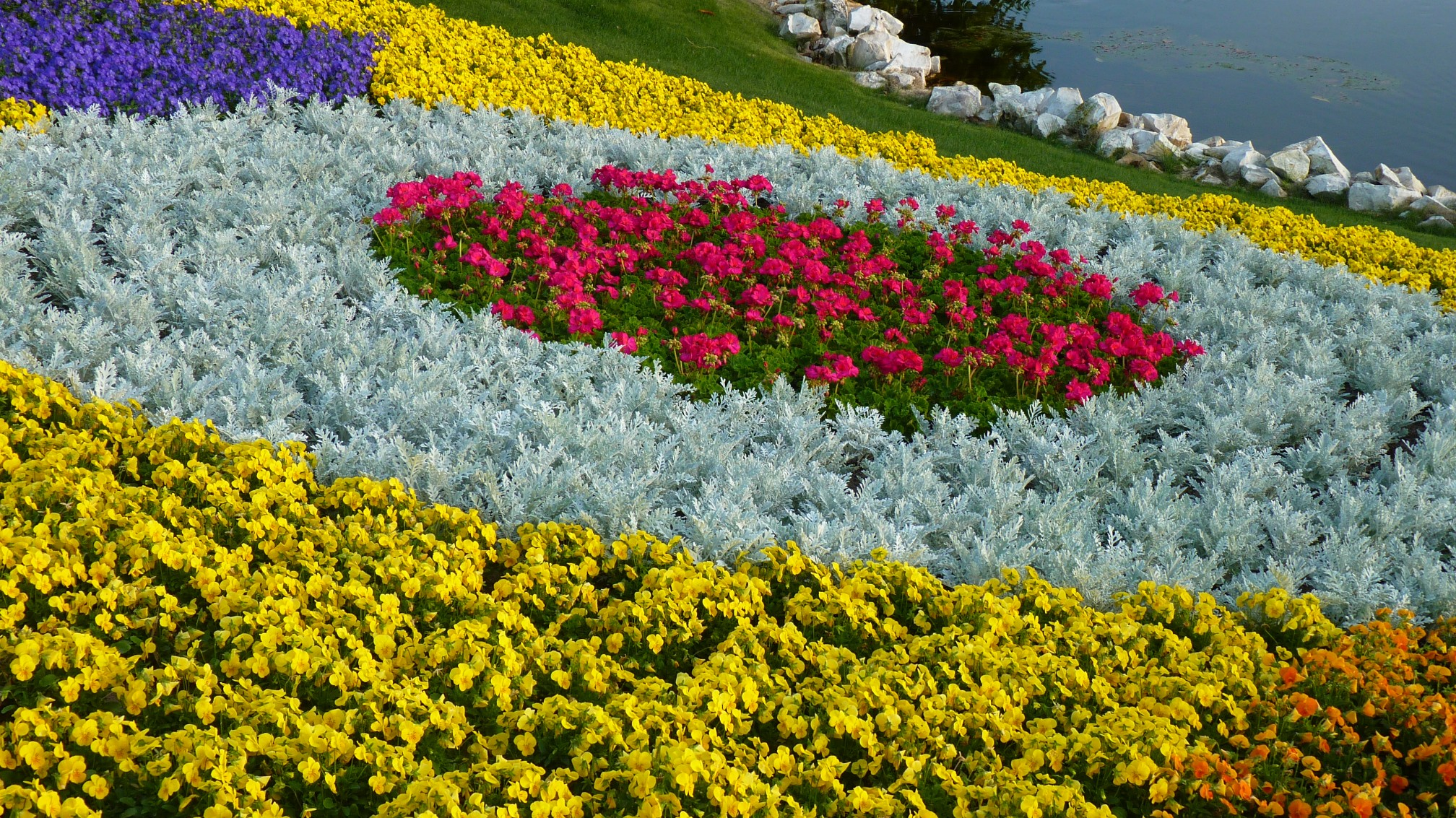 Jud's Disney Picture of the Day: FLOWER BED - Zannaland