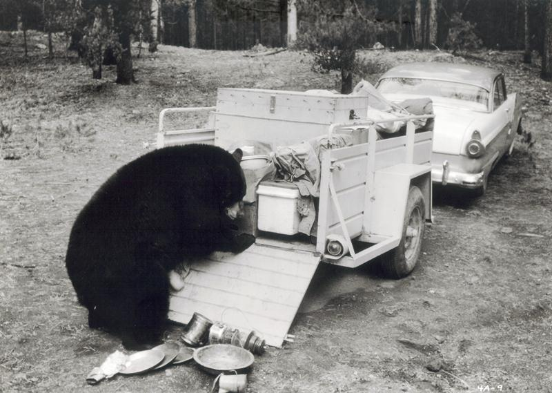Yellowstone Cubs 01 (1963)