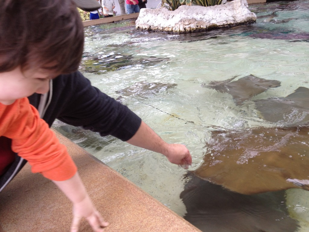 SeaWorld stingray petting