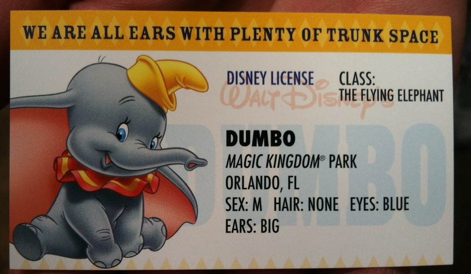 Dumbo pilots license