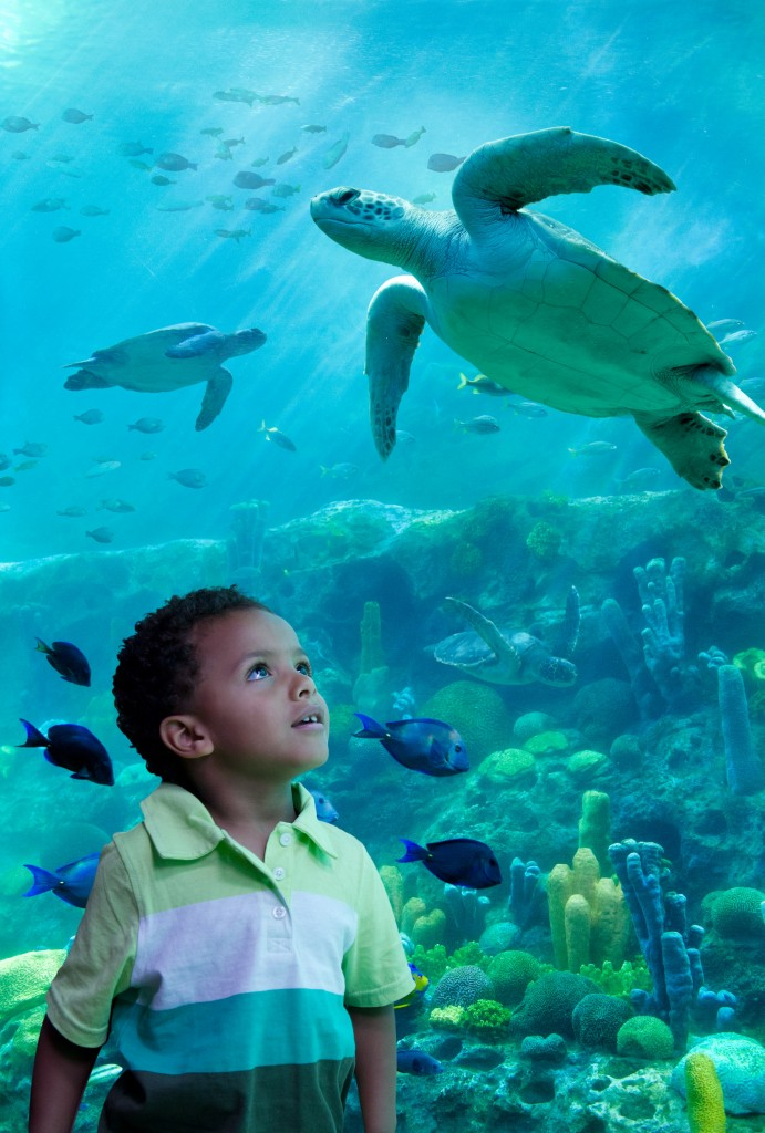 TurtleTrek Vertical Habitat