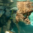 Remember the huge expansion Discovery Cove unveiled last year across from Sea World Orlando? They are now adding another new area – Freshwater Oasis.   Now open at Discovery Cove in Orlando is Freshwater Oasis, an all-new attraction featuring wading adventures and face-to-face encounters with playful otters and curious marmosets. […]