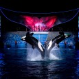 SeaWorld just sent over their latest news for summertime events and happenings. Looks like lots of fun will be happening over the next couple of months! Summer Nights at SeaWorldis a nighttime spectacular that only SeaWorld could create, and the best place to be in Central Florida when the sun...