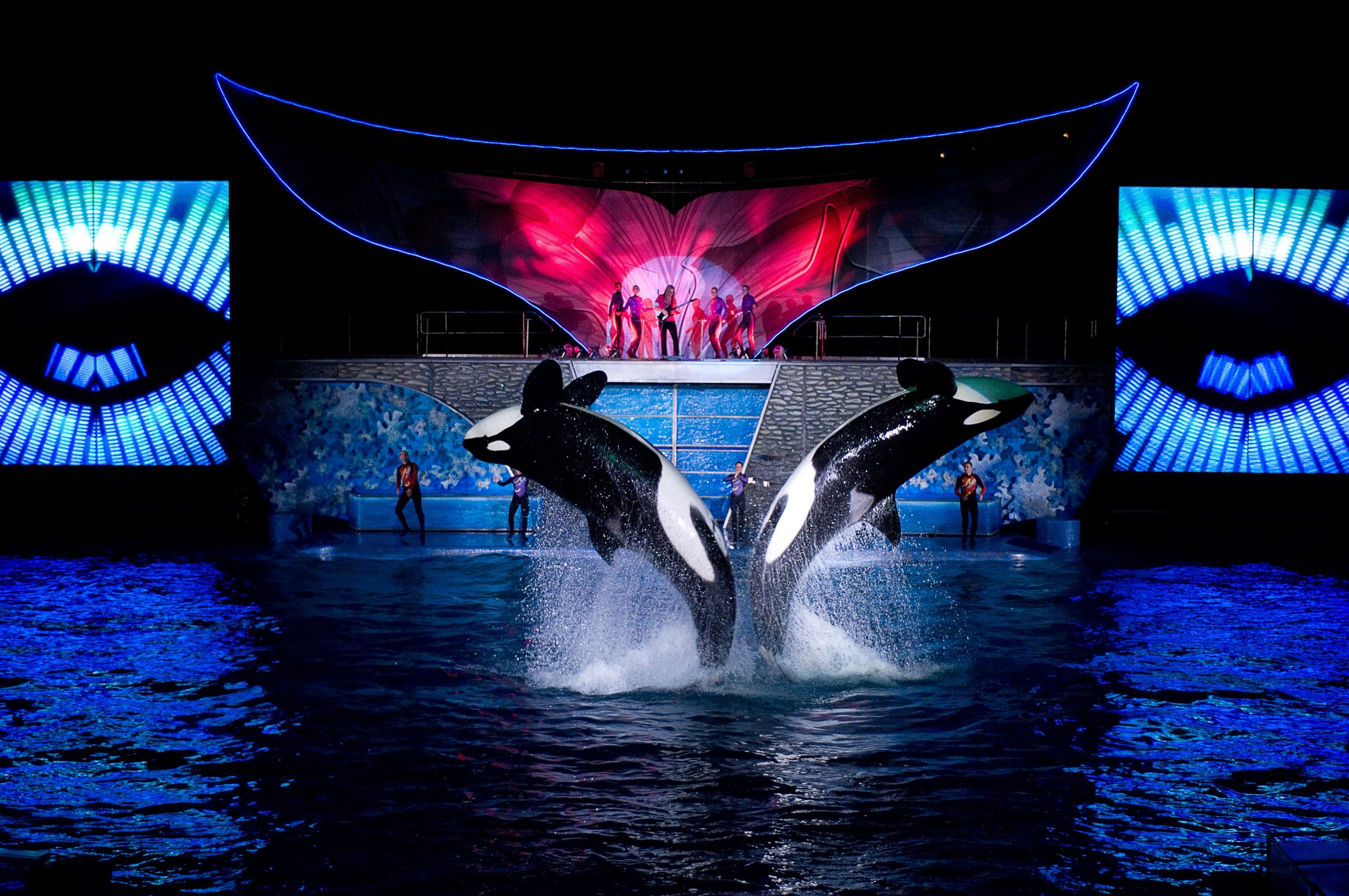 Summer Nights Arrive at SeaWorld Orlando