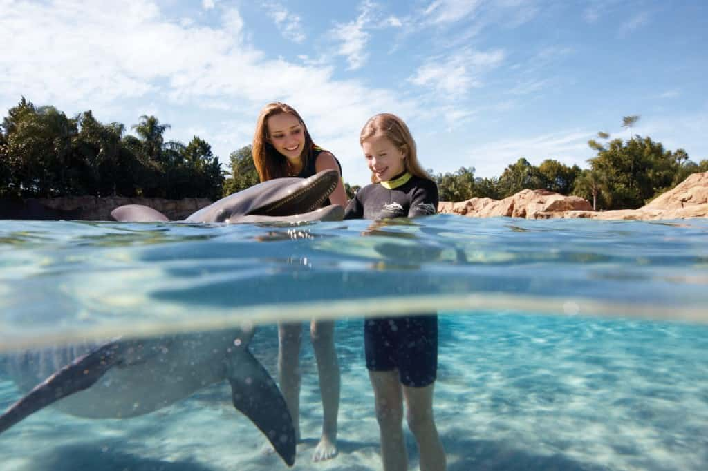 Dolphin Interaction at Discovery Cove