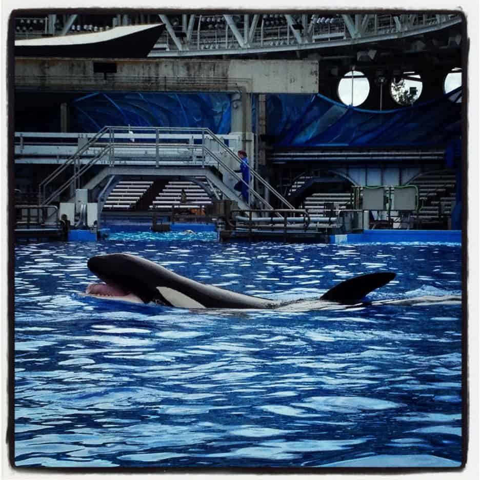 Why Dine With Shamu is a SeaWorld Must-Do!