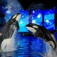 One of my family's favorite places during the holidays is SeaWorld – with their wonderful Christmas Celebration, included in the price of regular admission, the spirit of the season is sure to find you there. This year was no different and my children had a wonderful time seeing the shows...