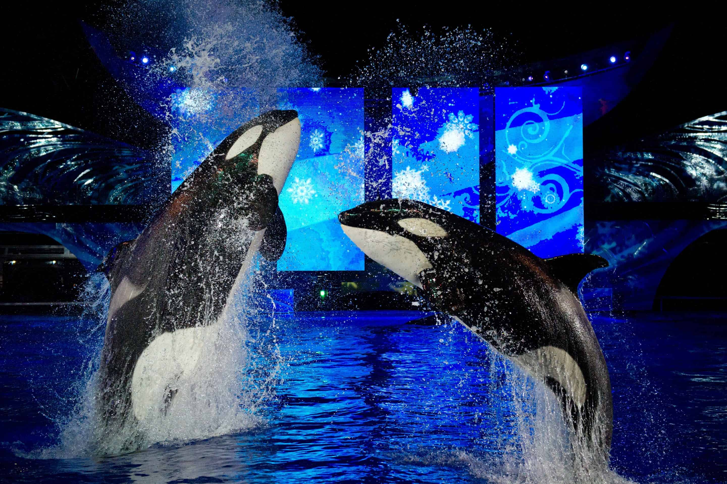 Sea World's Christmas Celebration Lights Up the Season