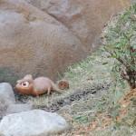Friends of Pascal scavenger hunt