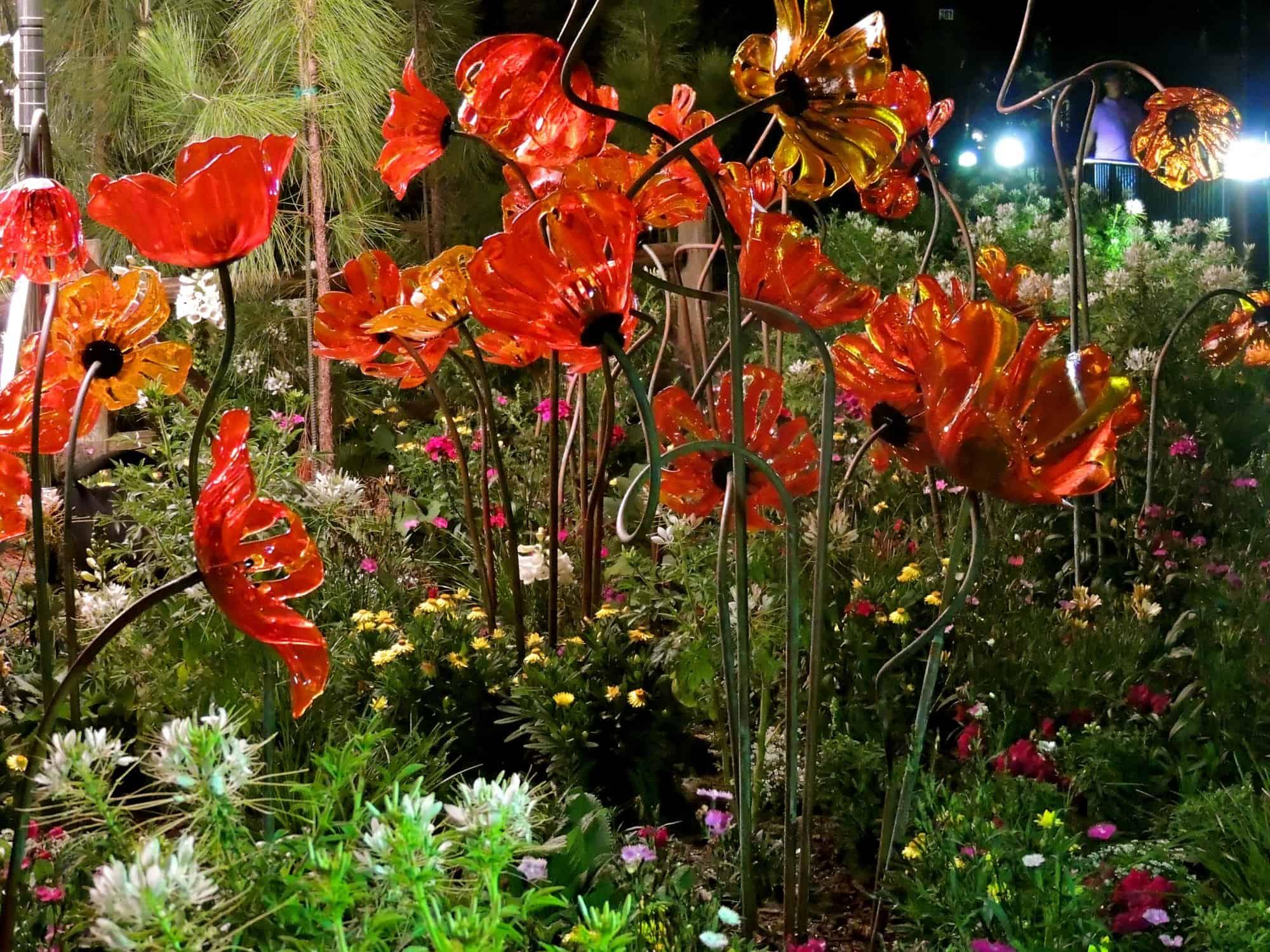Oz garden poppies