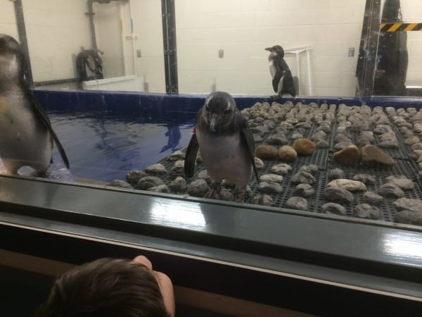 Summer Adventures: Behind the Scenes at the Georgia Aquarium