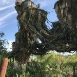 Disney's Pandora